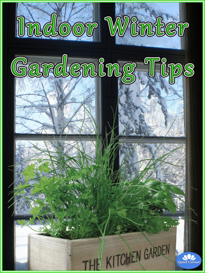 Indoor Winter Gardening Tips