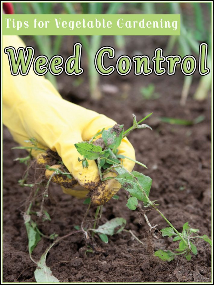 Weed Control – Tips for Vegetable Gardening
