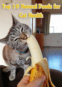 10 Best Natural Foods for Cat Health